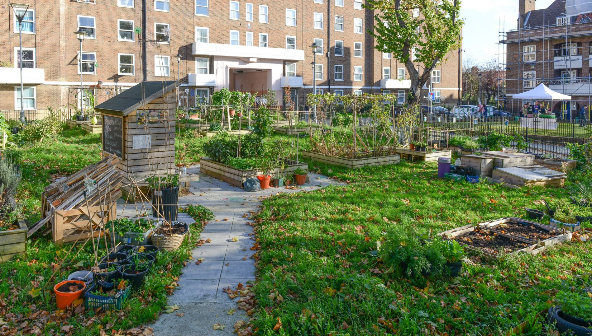 Community Food Growing Hubs