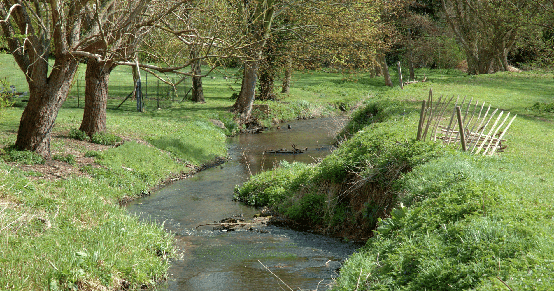 River Ver Junior River Wardens