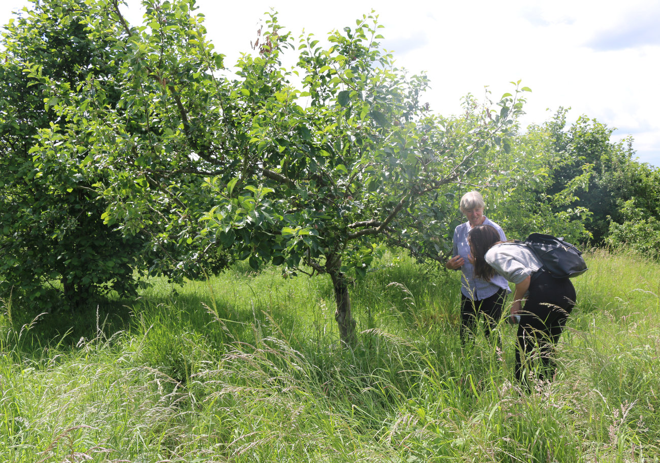 Chinbrook Community Orchard