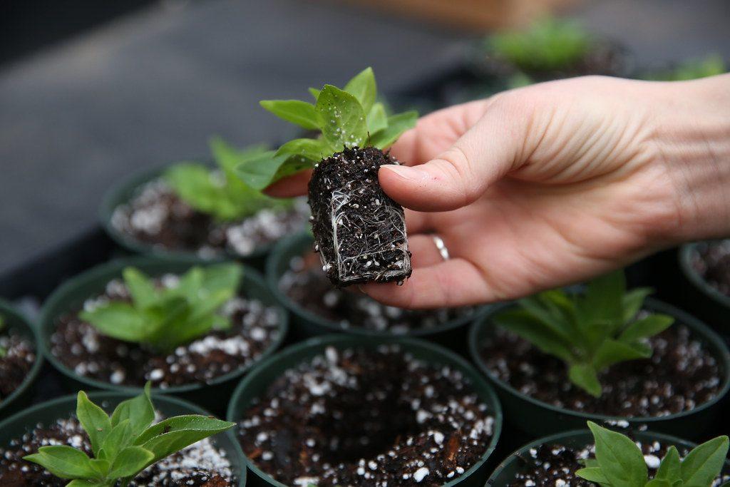 Planting, half term, family activities