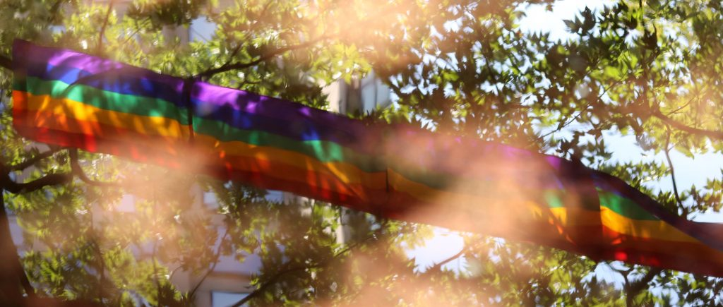pride_flag_trees