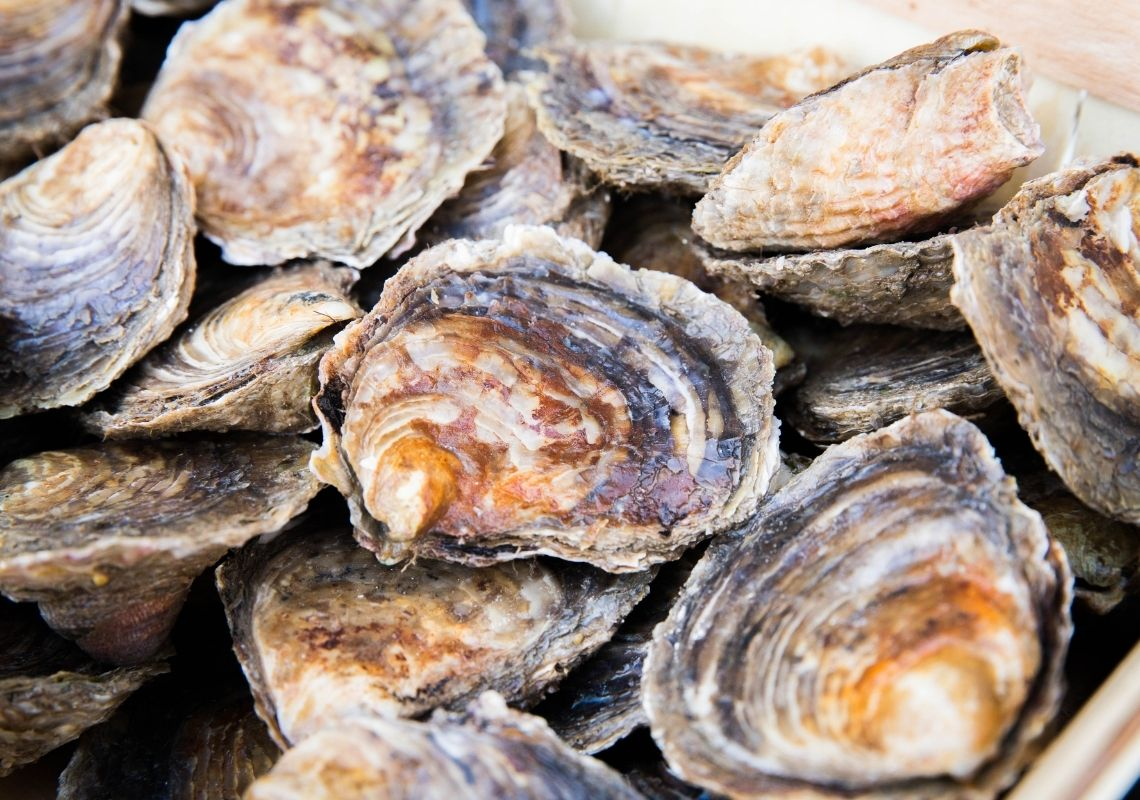 Tyne and Wear coast set for People's Postcode Lottery to save Oysters