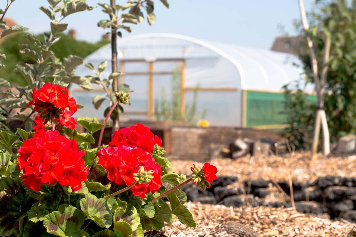 Grow Speke community garden