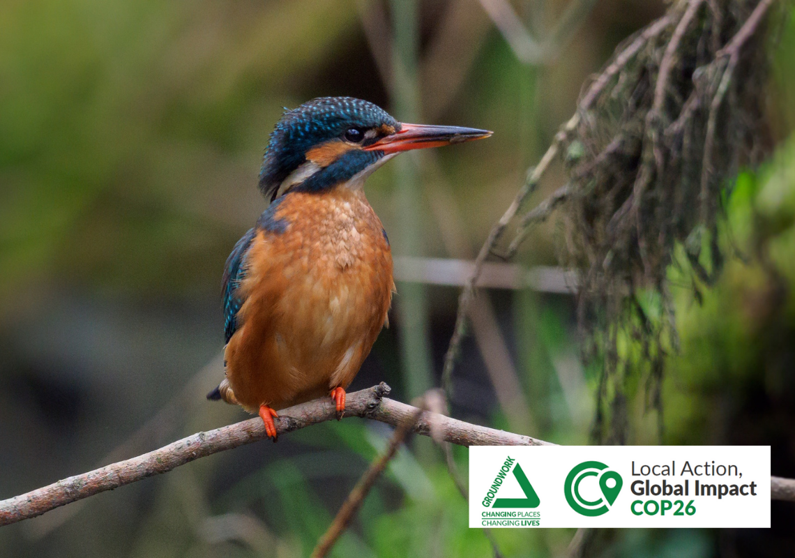 BLOG: Why is biodiversity important for humans and wildlife?