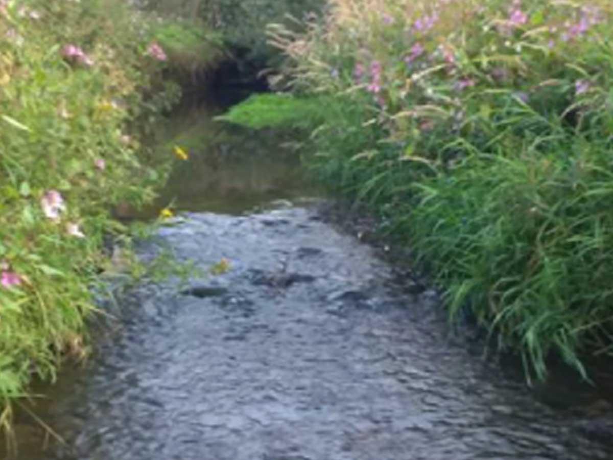 Stream in Douglas Catchment