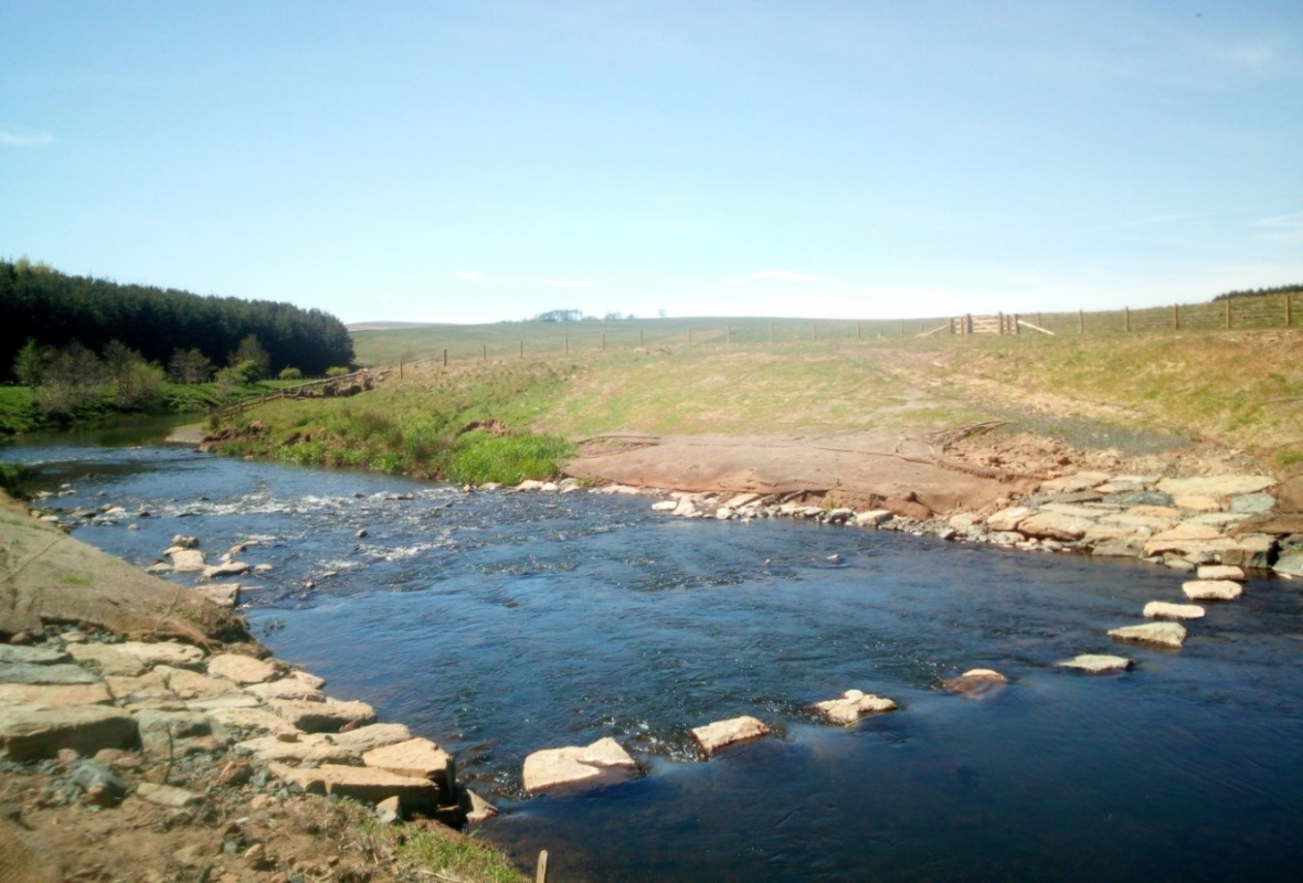 BLOG:  How healthy rivers and estuaries can contribute to climate mitigation
