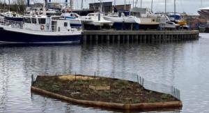 A vegetated raft in a river